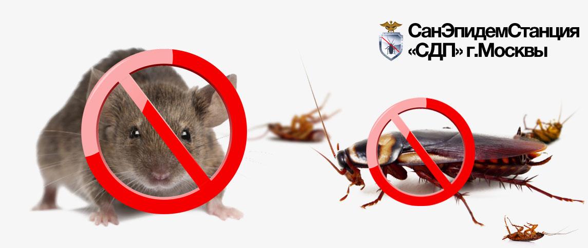 Санэпидемстанция в Москве: уничтожение тараканов